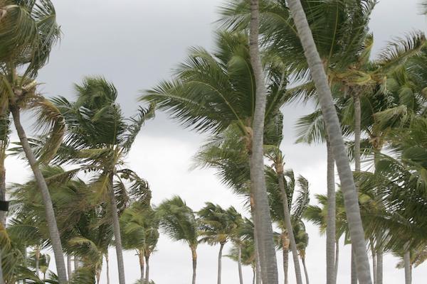 viento palmeras